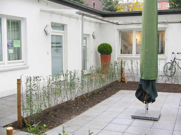 Als Stehhilfe bekommt die frisch gepflanzte Ligusterhecke im ersten Jahr ein Drahtgerüst.